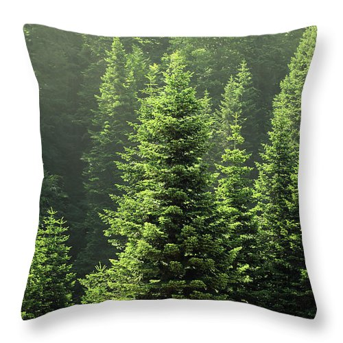 Scenics Throw Pillow featuring the photograph Pine Tree by Petekarici