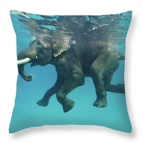 Underwater Throw Pillow featuring the photograph Swimming Elephant by Mike Korostelev Www.mkorostelev.com