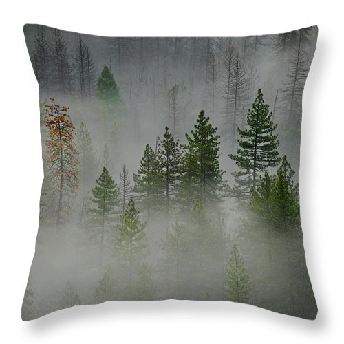 Forest Throw Pillow featuring the photograph Trees In Yosemite by Jon Glaser