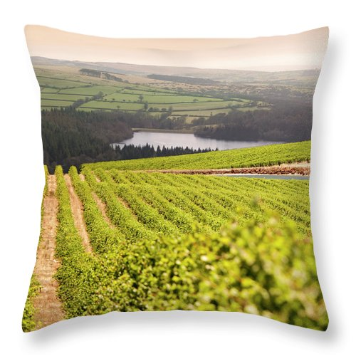 Scenics Throw Pillow featuring the photograph Vineyard At Sunset by Lockiecurrie