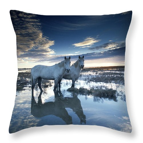 Horse Throw Pillow featuring the photograph Wild Horses Equus Caballus, France by Art Wolfe