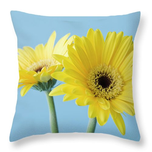 Two Objects Throw Pillow featuring the photograph Yellow Flowers On Blue Background by Kristin Lee