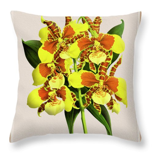 Vintage Throw Pillow featuring the drawing Orchid Vintage Print On Tinted Paperboard by Baptiste Posters