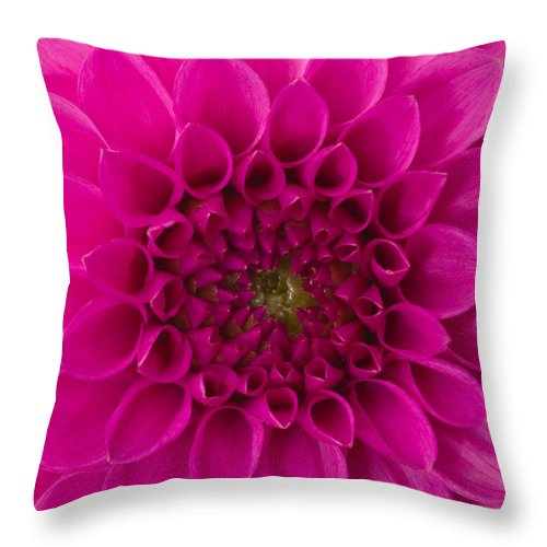Saturated Color Throw Pillow featuring the photograph Dahlia by Vidok