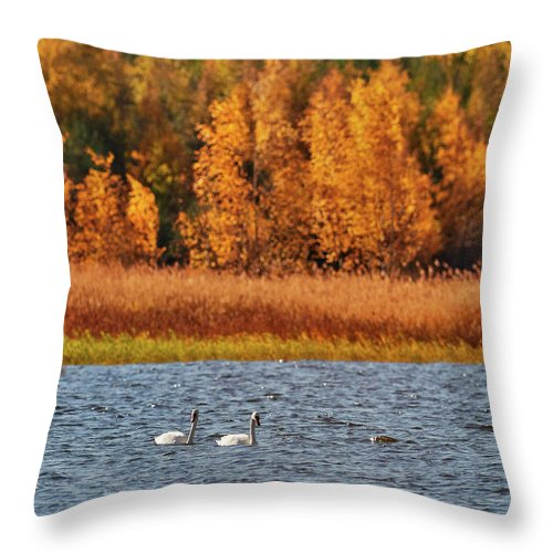 Fall Throw Pillow featuring the photograph Mute Swan by Jouko Lehto