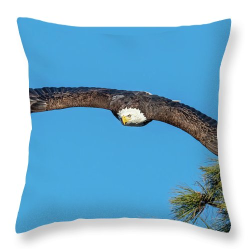 Eagle Throw Pillow featuring the photograph Wingspan 2 by Mike Dawson