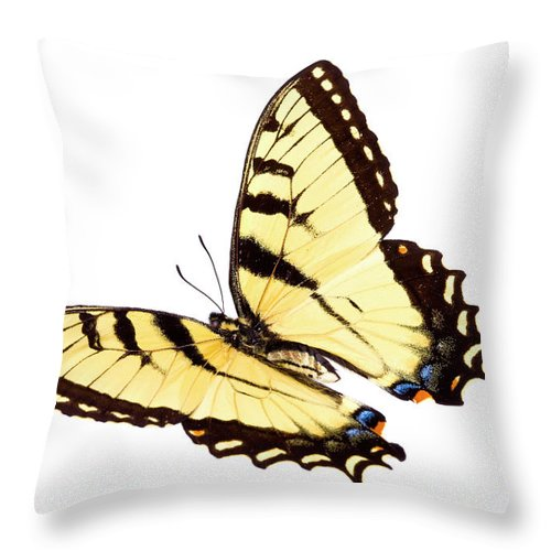 Orange Color Throw Pillow featuring the photograph Butterfly by Liliboas