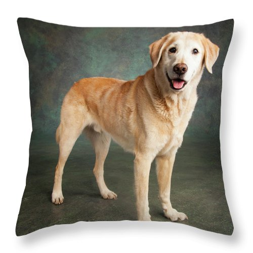 Photography Throw Pillow featuring the photograph Portrait Of A Labrador Mixed Dog by Panoramic Images