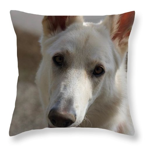 Dog Throw Pillow featuring the photograph Dog Portrait by Veronique Dubois
