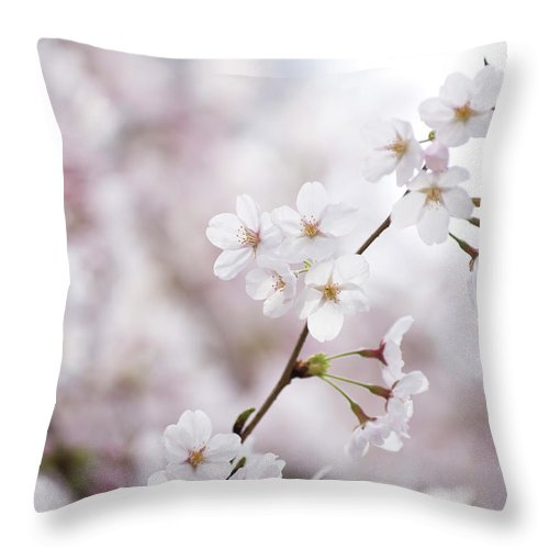 Celebration Throw Pillow featuring the photograph Cherry Blossoms by Ooyoo