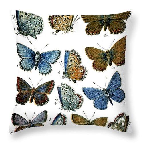 Common Blue Butterfly Throw Pillow featuring the digital art Butterflies by Duncan1890