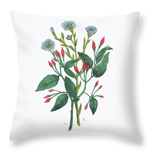 White Background Throw Pillow featuring the digital art Victorian Botanical Illustration Of by Bauhaus1000