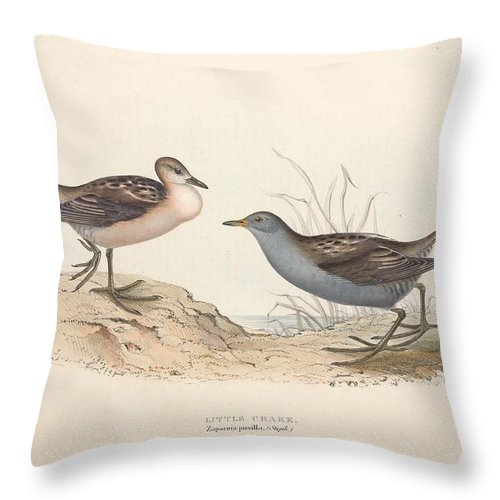 Nature Throw Pillow featuring the painting Different Types Of Birds Illustrated By Charles Dessalines D Orbigny 1806-1876 21 by Charles Dessalines D Orbigny
