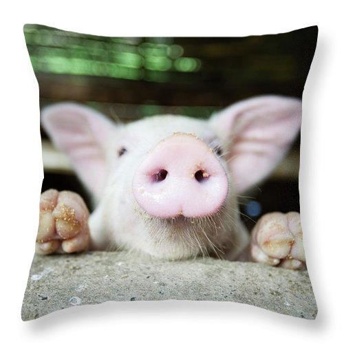 Negros Oriental Throw Pillow featuring the photograph A Baby Pig In Its Pen by Design Pics / Deddeda