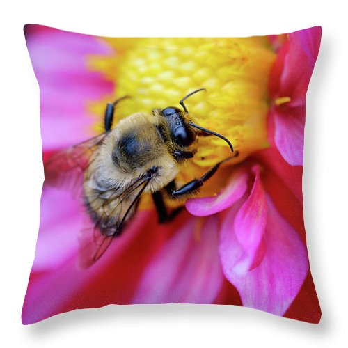 Dahlia Throw Pillow featuring the photograph A Bumblebee On A Flower by Nicole Young