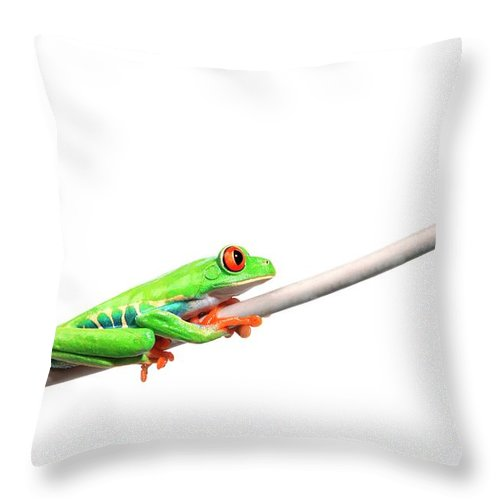 Rope Throw Pillow featuring the photograph A Frog Hanging On by Design Pics/corey Hochachka