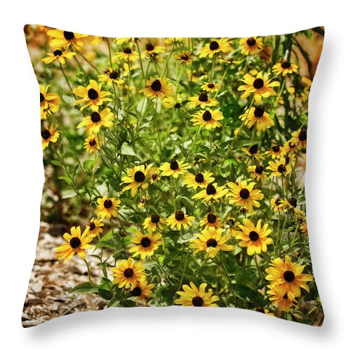 Rockville Throw Pillow featuring the photograph A Group Of Bossoming Black-eyed Susans by Maria Mosolova