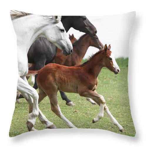 Horse Throw Pillow featuring the photograph A Group Of Galloping Horses In An Open by Somogyvari