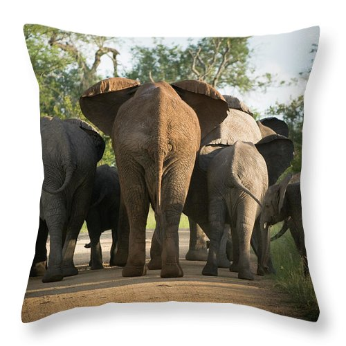 Cow Throw Pillow featuring the photograph A Herd Of Elephants Heading Away From Us by Jono0001