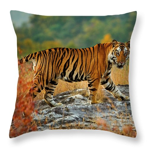 Vertebrate Throw Pillow featuring the photograph A Large Tiger In Bandhavgarh National by Mint Images - Art Wolfe