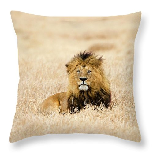 Grass Throw Pillow featuring the photograph A Lion by Sean Russell
