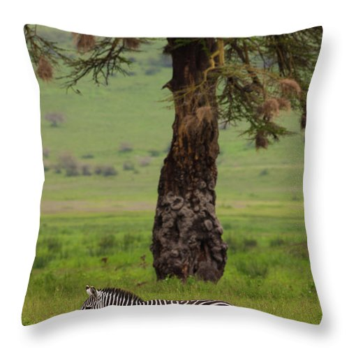Plains Zebra Throw Pillow featuring the photograph A Plains Zebra In Ngorongoro by Mint Images - Art Wolfe