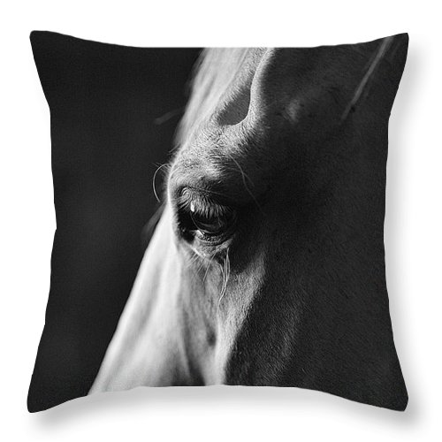 Horse Throw Pillow featuring the photograph A Window To The Soul by SL Ernst