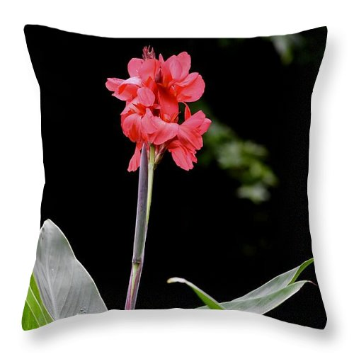 Colorful Flowers Throw Pillow featuring the photograph Above The Rest by Laurie Hein