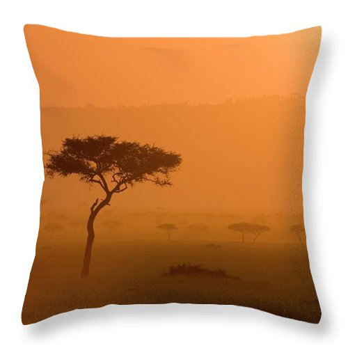 Tranquility Throw Pillow featuring the photograph Acacia Tree At Sunset, Masai Mara by James Hager / Robertharding