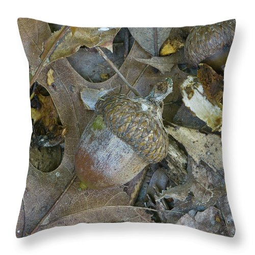 Acorn Throw Pillow featuring the photograph Acorn - 2337 by Jerry Owens