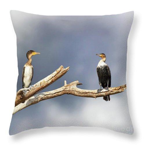 Lake Throw Pillow featuring the photograph Adult And Juvenile Cormorants At Lake Naivasha by Jane Rix