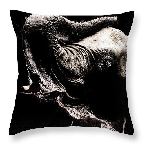 Animal Trunk Throw Pillow featuring the photograph African Elephant With The Trunk Raised by Henrik Sorensen