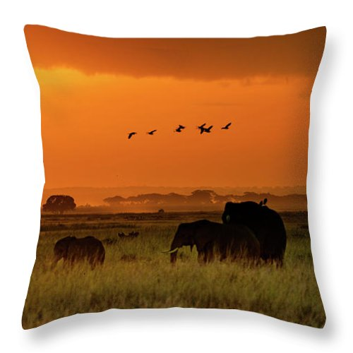Elephant Throw Pillow featuring the photograph African Elephants Walking At Golden Sunrise by Susan Schmitz
