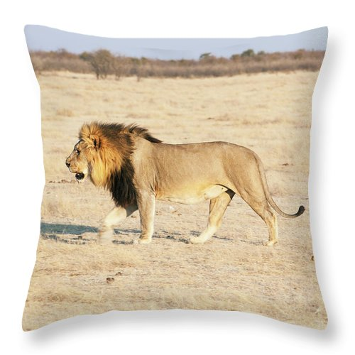Animal Themes Throw Pillow featuring the photograph African Lion On Savannah by Bjarte Rettedal