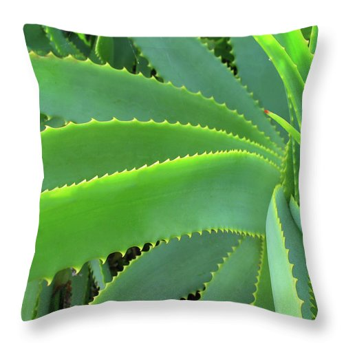 Natural Pattern Throw Pillow featuring the photograph Aloe Vera - Healing Plant by Lubilub