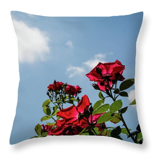 Nature Throw Pillow featuring the photograph Angled by Deborah Klubertanz