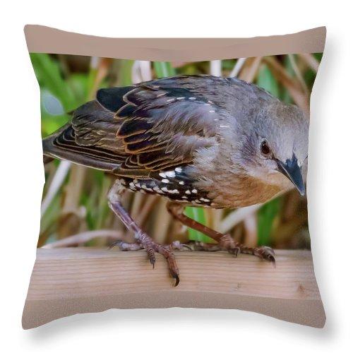 Bird Throw Pillow featuring the photograph Angry Bird by Joel Friedman