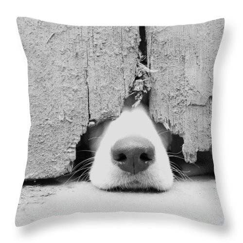 Pets Throw Pillow featuring the photograph Anyone Out There by By Jake P Johnson