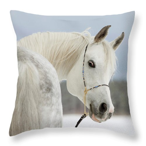 Horse Throw Pillow featuring the photograph Arabian Stallion by Photographs By Maria Itina