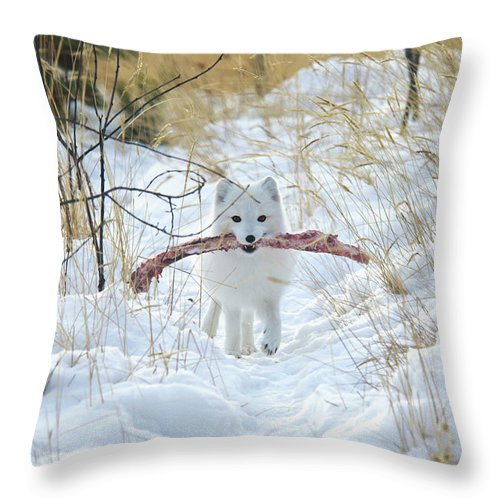 Grass Throw Pillow featuring the photograph Arctic Fox Alopex Lagopus In White by Mark Newman / Design Pics