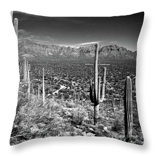 Saguaro Cactus Throw Pillow featuring the photograph Arizona, Tucson, Saguaro Np, Brown by James Denk