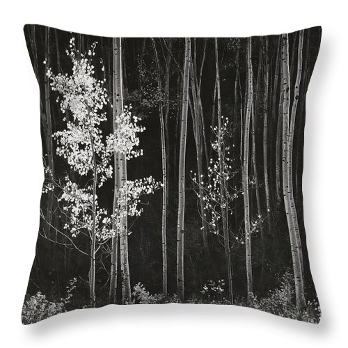Ansel Adams Throw Pillow featuring the digital art Aspens Northern New Mexico by Ansel Adams