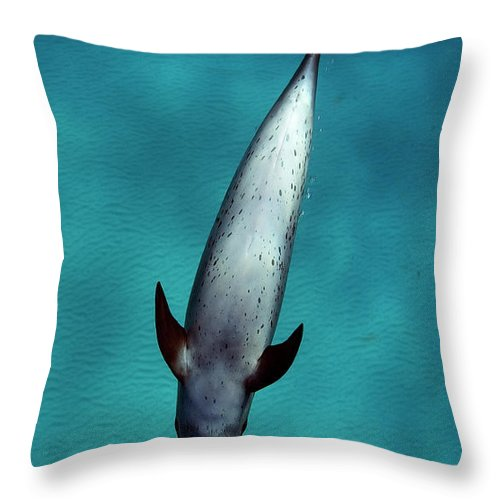 Animal Themes Throw Pillow featuring the photograph Atlantic Spotted Dolphin by Todd Mintz Www.tmintz.ca