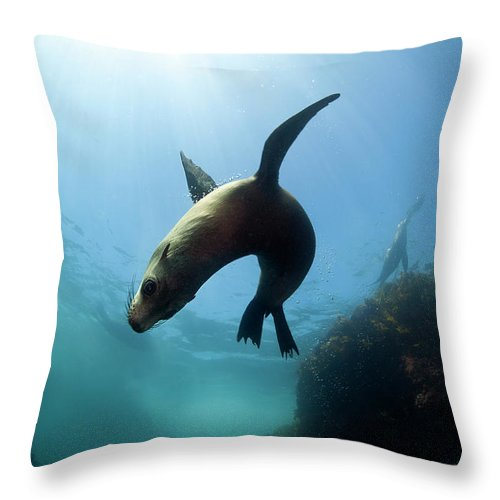 Underwater Throw Pillow featuring the photograph Australian Fur Seal With Sun Burst by Alastair Pollock Photography
