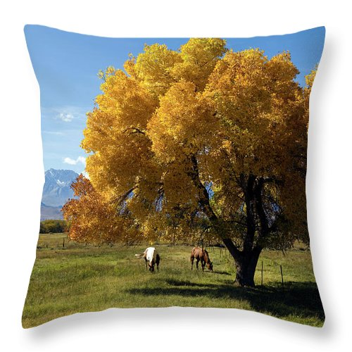 Horse Throw Pillow featuring the photograph Autumn Horses by Kevinjeon00