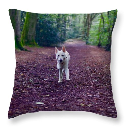 Dogs Throw Pillow featuring the photograph Autumn by Veronique Dubois