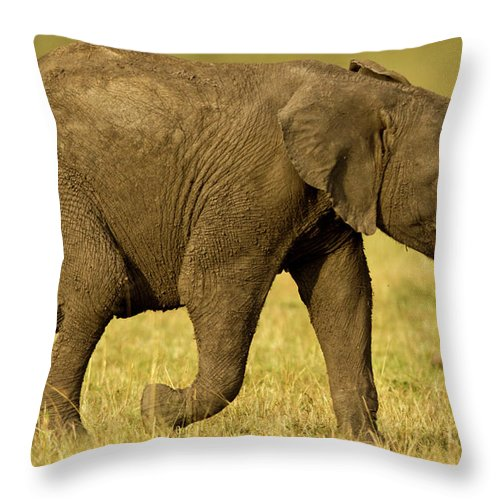 Following Throw Pillow featuring the photograph Baby Elephant Following The Herd On The by Manoj Shah