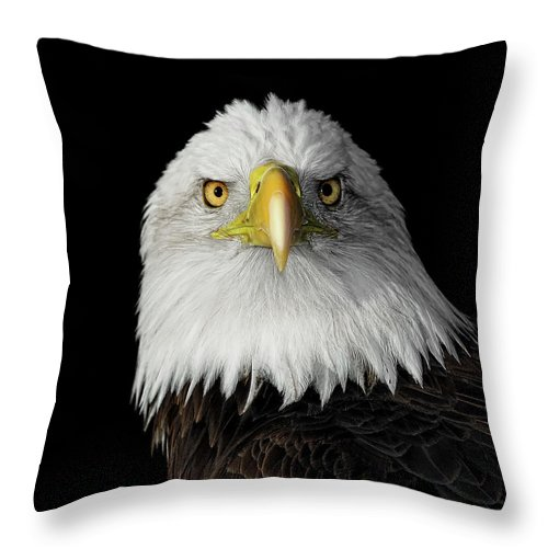 Animal Themes Throw Pillow featuring the photograph Bald Eagle by Dansphotoart On Flickr