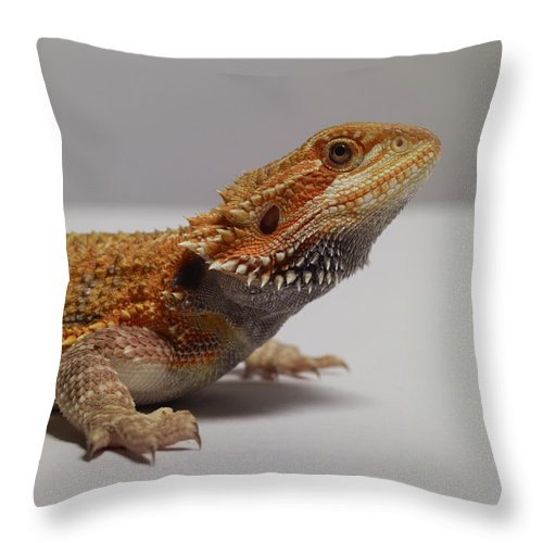 Alertness Throw Pillow featuring the photograph Bearded Dragon by Dan Burn-forti