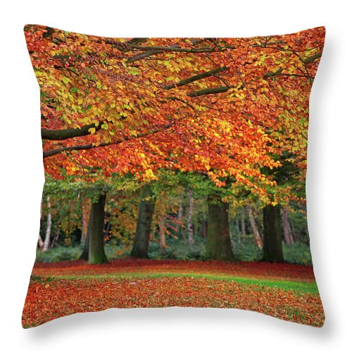 Orange Color Throw Pillow featuring the photograph Beautiful Autumn In Park by Lorado